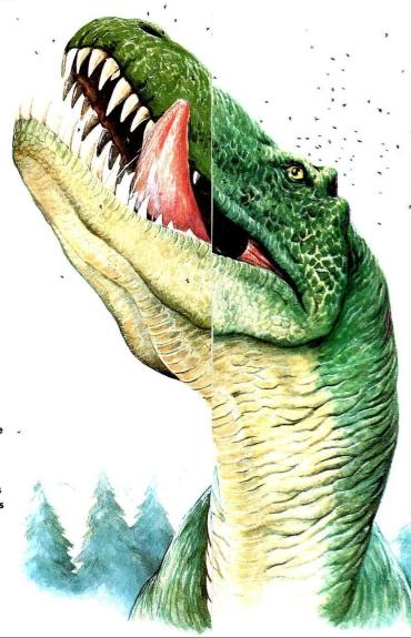 rex11.jpg