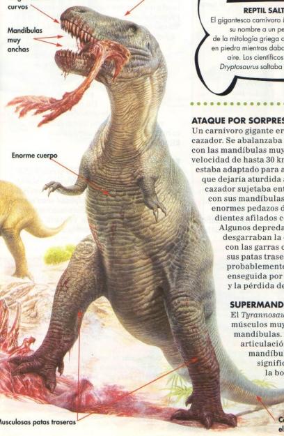 rex9.jpg